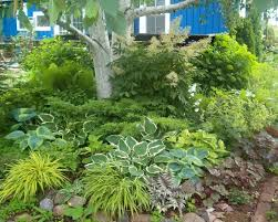 Small Picture Best Ideas About Hosta Garden Design Pictures Hostas Flowers