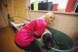 woman bathing a dog in bathtub at dog care center stock photo