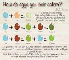 Eggs Of All Colors M M Eggs
