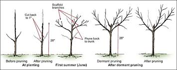 Backyard Orchard Culture  Deep Green PermacultureCan You Prune Fruit Trees In The Summer