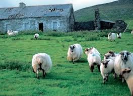 Ceux-là sont irlandais....Celtes dans Irlande