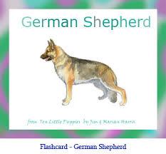 newfoundland dog flashcard with breed name dog flashcard with breed