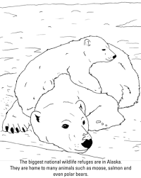 Small Picture Polar Bears coloring page Free Printable Coloring Pages