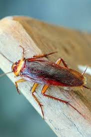 get tips and tricks for banishing roaches from your yard and gardens s