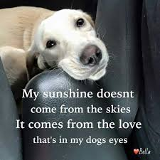 Quotes About Dogs Gorgeous Top 48 Greatest Dog Quotes And Sayings With Images