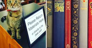 13 Libraries Book Lovers Need To Follow On Instagram