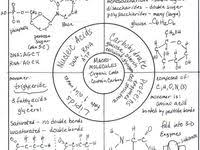 9e624644cfb00067c4e959cb11225279 32 best images about ap bio on pinterest graphic organizers on meiosis and mitosis comparison worksheet