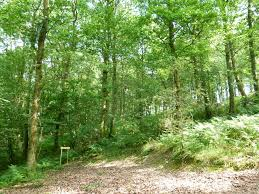 Mature woodland for sale