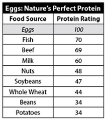 Egg Protein Chart How Many Proteins Does Egg Contain