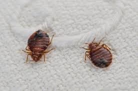 10 things you didn t know about bedbugs
