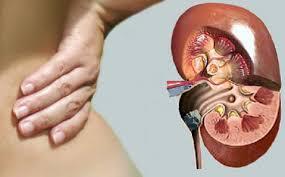 Imagini pentru rinichi