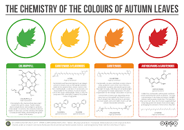 Fall Leaf Color Chart A Helpful Chart That Explains The Chemicals That Give Autumn