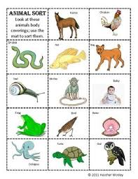 Science Animal Body Coverings Cc Cycle 1 Science Teaching