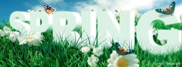 spring springtime daisies