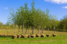 why fall is the best time to plant trees in texas