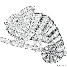 Coloring Pages Chameleon Coloring Page Panther Printable Download