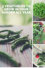 Vegetable Sunlight Requirement Chart 5 Super Easy Vegetables To Grow In Pots All Year