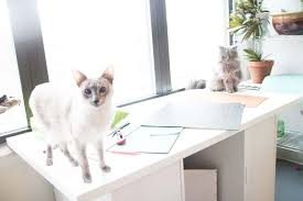 how to build cat shelves your cat will love this is a easy diy project