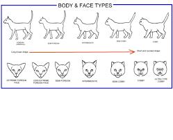 Cat Body Shape Chart Veterinary Page 3 Backup Tumblr