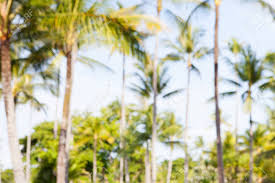 blurred outdoor backgrounds.  Outdoor Stock Photo  Summer Tropical Palm Trees Blurred Outdoor Background Intended Blurred Outdoor Backgrounds