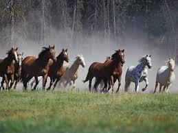 wild horses running wallpaper. Wild Horses Wallpapers Wallpaper Cave Running Horse Animal Hd Throughout