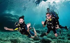 """Go Dive""的图片搜索结果"