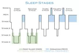 Good Sleep Chart Do I Need Good Sleep Before Or After My Workout Quora