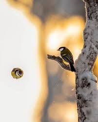 photographer spends months in forest capturing angry birds in real life