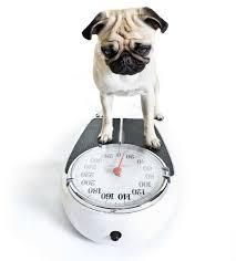 Cairn Terrier Growth Chart Breed Weight Chart
