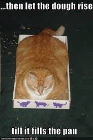 Funny memes! on Pinterest   Funny Cat Memes, Animal Memes and ... via Relatably.com