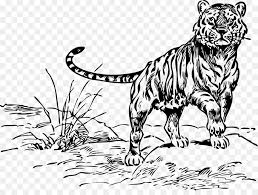 tiger black and white drawing. Fine White Bengal Tiger Siberian Tiger Felidae Cat Clip Art  Black And White Drawings Inside Drawing A