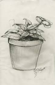 pot of chili drawing. Interesting Drawing Flower Pot Greenhouse Study By Chilijr  Intended Of Chili Drawing
