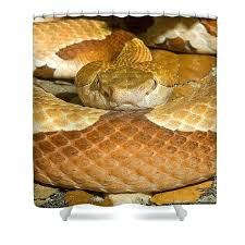 shower snake animal shower curtain featuring the photograph copperhead snake by h sharp shower drain snake home depot