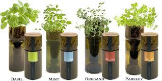 indoor herb garden kit. Indoor Herb Gardens Grow Bottle Garden Kits Australia Kit I
