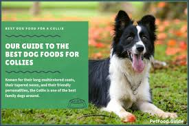 The 15 Best Dog Foods For Collies Our 2019 In Depth Feeding