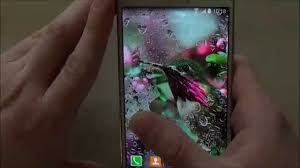 free hummingbirds live wallpaper for android phones and tablets