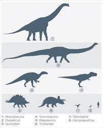 Dinosaur Sizes Comparison Chart Dinosaurs Size Comparison With A Human Dinosaur History