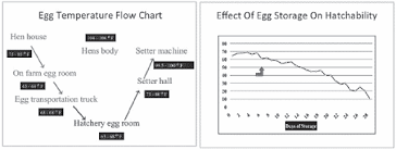 Chick Temperature Chart Chick Quality Hatchery Impact On Performance The Poultry Site