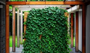 Garden Design Garden Design With Climbing Plants Ten Best Wall Climbing Plants For Shade