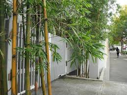 Choosing A Good Container Bamboo