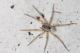 BugShot 2012: Wolf Spiders : Nature Closeups