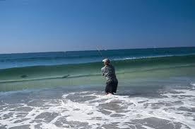 Image result for fly fishing for striped bass
