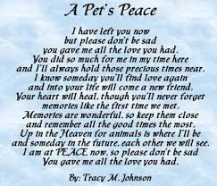 Loss Of A Pet Quote 100 Best Pet Loss Quotes On Pinterest Dog Loss Dog Loss Quotes 100 35