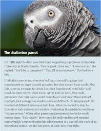 Can We Know What Animals Are Thinking The Economist