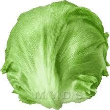 lettuce clipart. Wonderful Lettuce Vector Royalty Free Download Lettuce Clip Art For Clipart