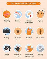 Cat Skin Conditions & Natural Remedies | Canna-Pet