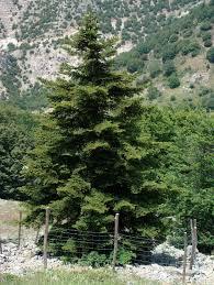 Flora endemica della Sicilia