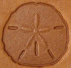 3d sand dollar stamp 8681 00 tandy leather stamping tool stamps craftool tools for