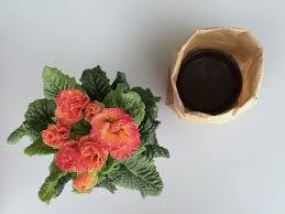 Paper Flower Pots Diy Brown Paper Flower Pots Babyccino Kids Daily Tips