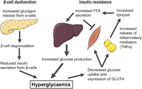 G Proteincoupled Receptors Targeting Insulin Resistance Obesity